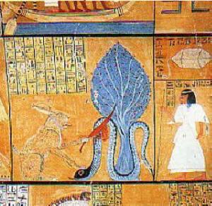 Dio Apophis